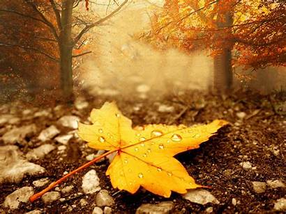 Season Autumn Fall Wallpapers Leaf Leaves Maple