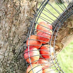 Wire Apple Bird Feeder By Dibor