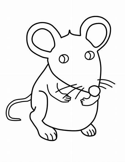 Maus Rato Ratones Dibujos Colorear Mouse Coloring