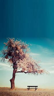 Tree Bench Smartphone HD Wallpapers ⋆ GetPhotos