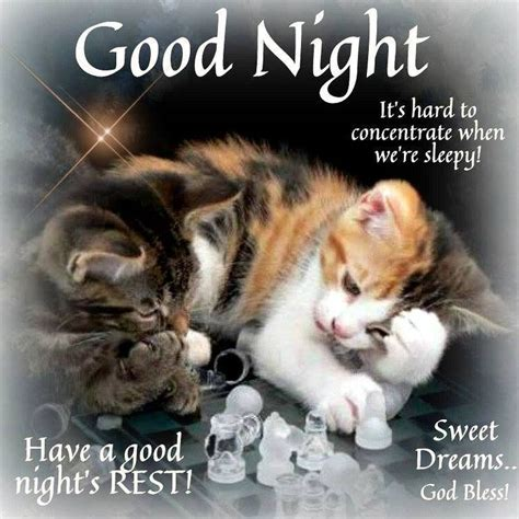 good night god bless good night cat good night good