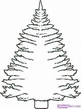 Pine Tree Draw Drawing Coloring Step Trees Drawings Drawn Colouring Clipart Xmas Cartoon Printable Clipartmag Popular Getcolorings Coloringhome Library Hellokids sketch template
