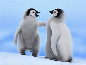 Cute Baby Penguins 1152 x 864 Wallpaper