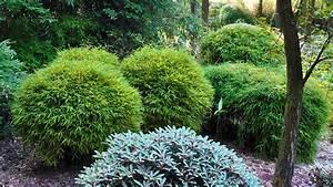 Wie Schnell Wächst Bambus : erleben sie mit bambus fern stliche exotik pflanzen k lle gartencenter gmbh co kg ~ Frokenaadalensverden.com Haus und Dekorationen