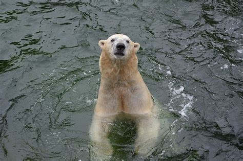 Learn All About Polar Bears