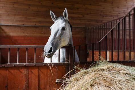 Pferd Blähungen Kotwasser