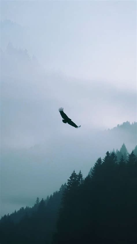 eagle flying  misty forest android wallpaper