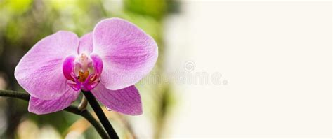 purple orchid border stock 1 520 royalty free