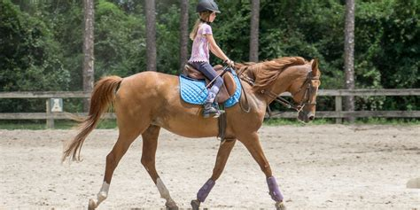 riding lessons horse horseback club ride lesson pass stables victory