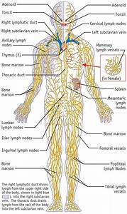 Biology Diagrams Images Pictures Of Human Anatomy And