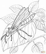Coloring Dragonfly Stands Printable Insect Adults Leaf Request Drawing Silhouettes Visit Clipart Supercoloring sketch template