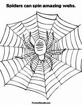 Coloring Web Spiders Spin Webs Legs Sheet Worksheet Amazing Spider Incredible Spinning Print Pages Socks Wheel Template Cursive Twistynoodle Built sketch template