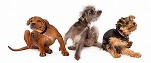 Anti Allergie Hund : allergie kopfkissen symptome japanisches schlafzimmer einrichten badezimmer im bettw sche ~ Orissabook.com Haus und Dekorationen