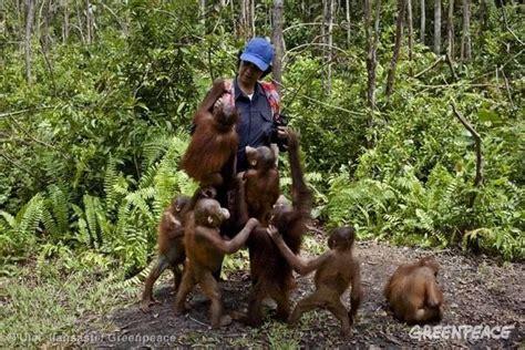steps companies    stop deforestation greenpeace usa