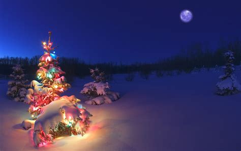 christmas lights in trees christmas tree light in snow hd wallpaper