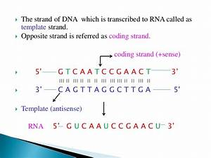 Transcription for What is a template strand