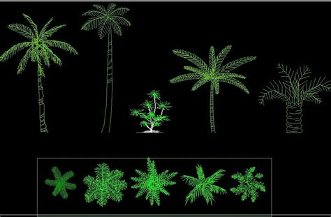 coconut palm tree plant front view elevation  top view