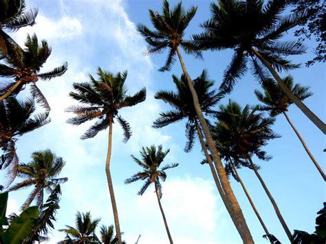 tanna island accommodation   south pacific island