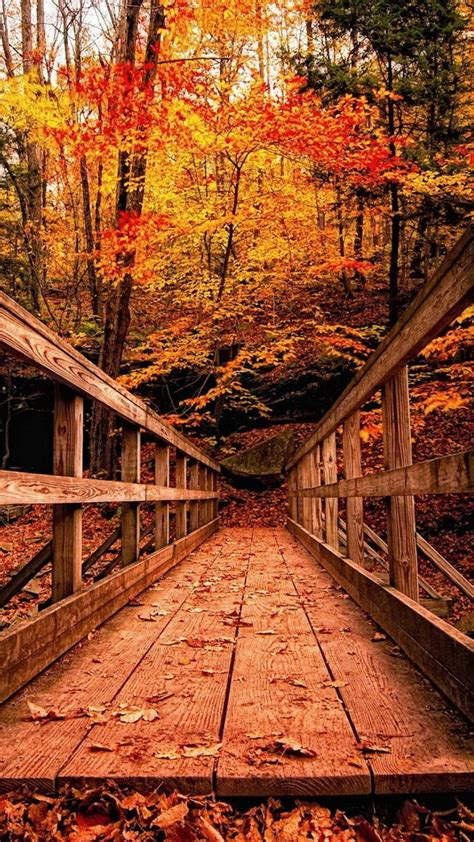 Android Hd Autumn Wallpapers by Wood Bridge In Autumn Forest Best Hd Wallpapers For