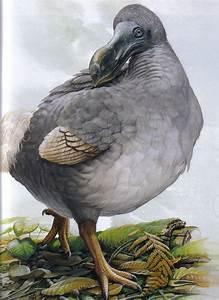 jessica pezalla: dodo birds