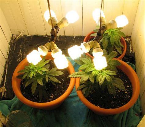 Expert Marijuana Growing Supplies Grow Lights