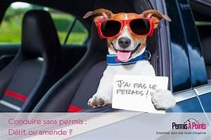 Conduire Sans Permis : d lit de conduire sans permis amende ou d lit ~ Medecine-chirurgie-esthetiques.com Avis de Voitures