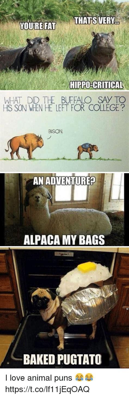 Alpaca My Bags Meme - alpaca my bags joke style guru fashion glitz glamour style unplugged