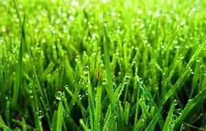 Rasen Lüften Mit Lüfterwalze : richtig rasen m hen mit dieser anleitung zum traumrasen akkurasenm her ~ Yasmunasinghe.com Haus und Dekorationen