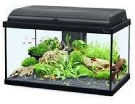 combien de poisson dans un aquarium aquarium de 60 litres quels poissons et combien