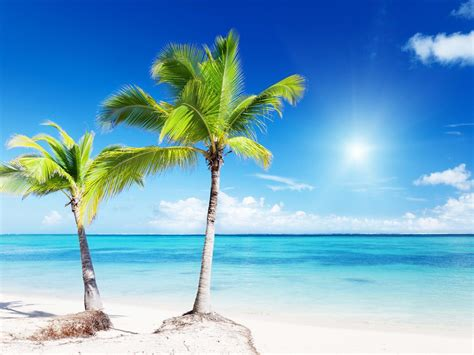 pin palm tree beach on pinterest