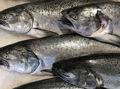 Southeast Winter King Salmon Troll Catch Falls Short Of