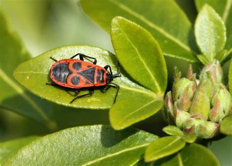 Combattre Les Punaises De Jardin by Insectes For 234 T De Fontainebleau La Nature Dans Tous