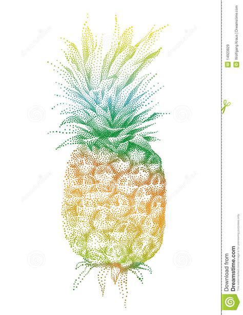 vector pineapple royalty  stock images image