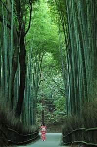 Kyoto Japan Sagano Bamboo Path