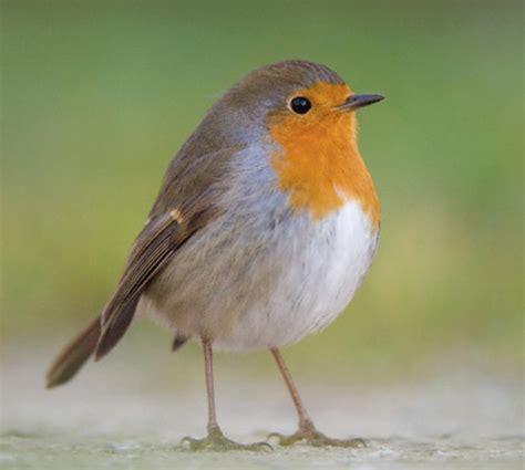 cuisine d 1 jour quel est le jardin idéal pour séduire les oiseaux