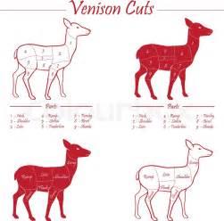 venison meat cut diagram scheme elements set
