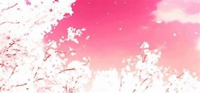 Cherry Blossoms Anime Blossom Hyouka Snapshot Flower