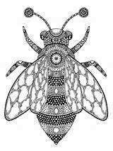 Coloring Fly Zentangle Janelle Bee Adult Dimmett Adults Deviantart Insect Drawing Mycoloring Colouring Books Rosalind Monks Animals Insects Bug Ink sketch template