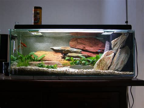 photo d 233 coration aquarium pas cher