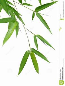 Bamboo Leaves stock image. Image of white, nature ...