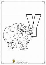 Worksheets Printable sketch template