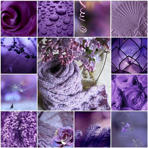 purple collage  gallery  flickr