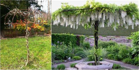 die besten  blauregen ideen auf pinterest wisteria
