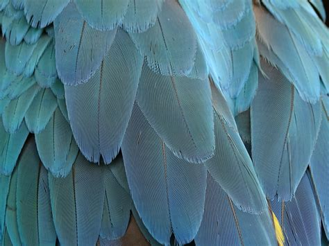 Wing, Structure, Leaf, Pattern, Green, Color