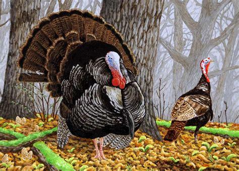 turkey bird hd wallpapers hd wallpapers