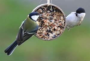 Vogelfutter Selbst Herstellen : vogelfutter selber machen rezept mit kokosfett wohn design ~ Orissabook.com Haus und Dekorationen