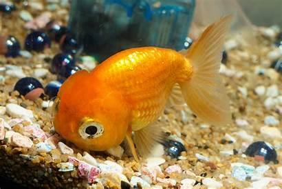 Fish Pet Types Pets Freshwater Names Bowl