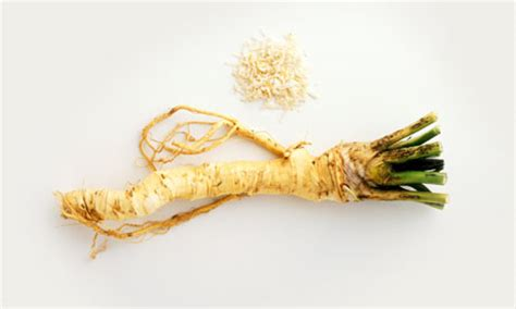 what is horseradish made from changing flavour behaviour life and style the guardian