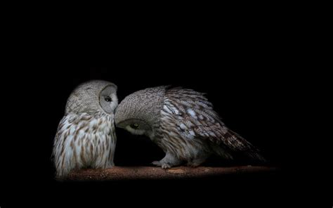 Background Owl Wallpapers by Hd Owl Wallpapers Owl Pictures Hd Animal Wallpapers