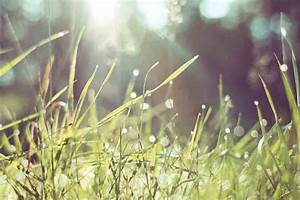 Quand Semer Du Gazon : conseils pour semer sa pelouse herbac ~ Dailycaller-alerts.com Idées de Décoration